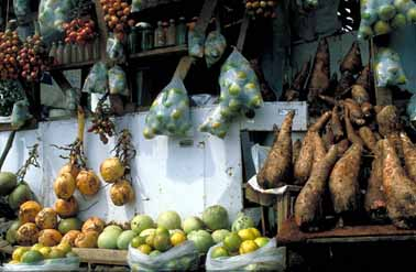 Native Produce of Costa Rica